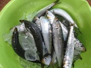 Fish2_20190904131601
