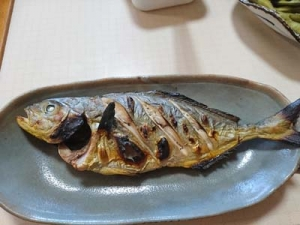 Kanpachi2