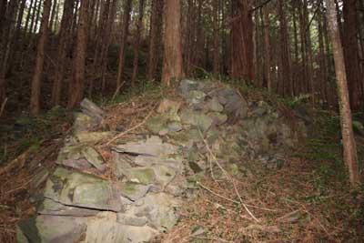 Kozakura1