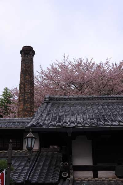 Sakura21_2