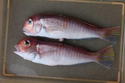 Akaamadai1