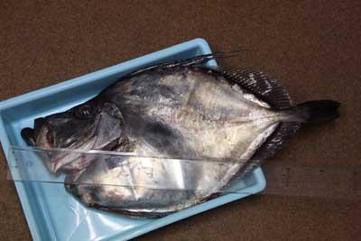 Kagamidai1