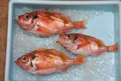 Ukeguchimebaru1