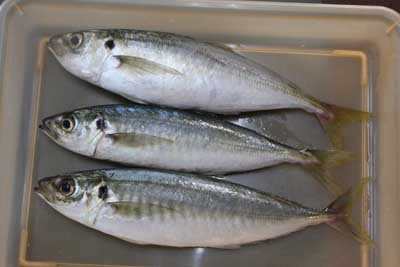 Maruaji1