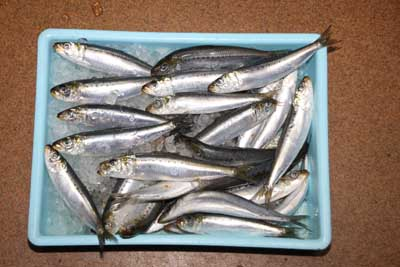 Maiwasi1