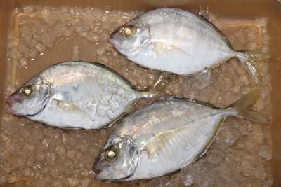 Kaiwari1