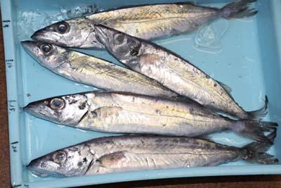 Kagokamasu1