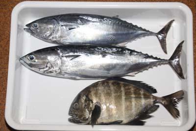 Okiaji1