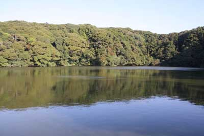 Sakuragaike1