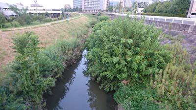 Kuwanoki