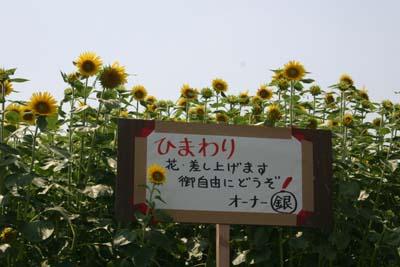 Himawari3
