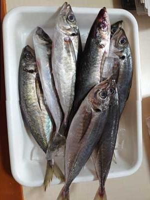 Fish1_20201202170601