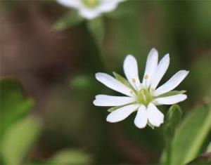Flower2_20200421165101