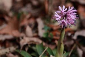 Flower3_20210307150301