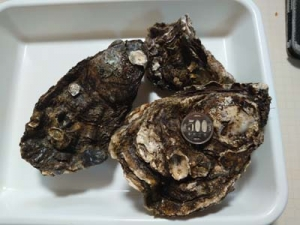 Oyster1_20210306071301
